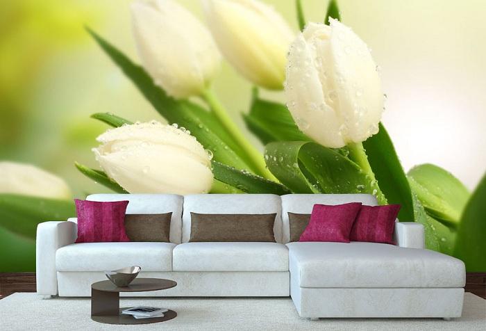 обои цветы белые тюльпаны