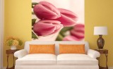 обои цветы розовые тюльпаны
