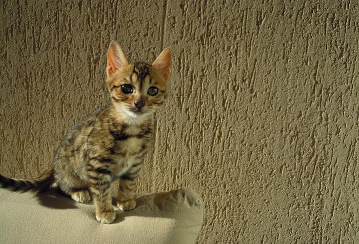 Котенок и антивандальные обои