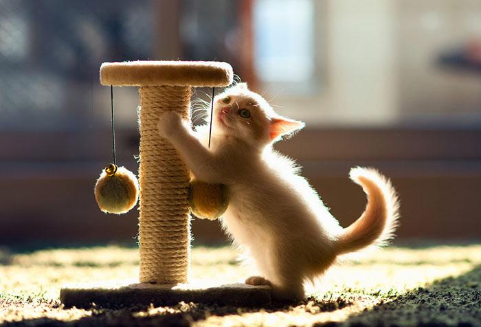 Котенок с когтеточкой